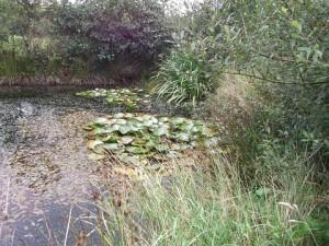 Pond 480