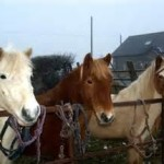 island equestrian centre
