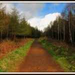springwell forest
